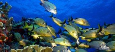 Обитающие в пустынях рыбы умеют задерживать дыхание на пять часов