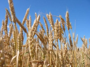 География сельского хозяйства