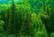 Общие основы пропаганды и экологические факторы