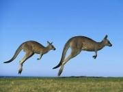 Avstraliyaning yovvoyi tabiati