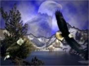 Птицы  - Жизнь / BBC: Life - 5 серия