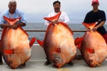 В океане найдена первая в мире теплокровная рыба