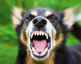 Правила поведения при встрече с собакой