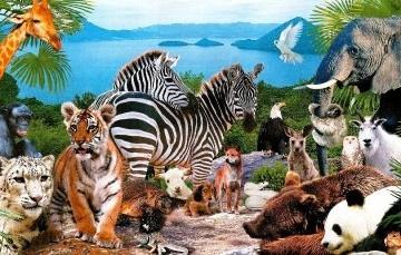 """""""В мире животных"""" - это красочная и занимательная игра"""