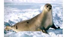 Финлядия планирует создать базу данных о загрязнении воздуха Арктики