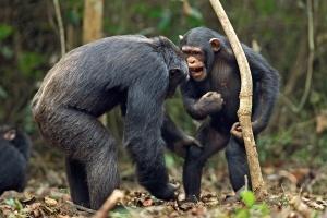 Приматы  - Жизнь / BBC: Life - 10 серия